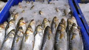 Mostra com os peixes de mar frescos no gelo no mercado de rua video estoque