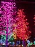 Mostra da luz da noite Imagens de Stock