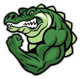 Mostra da mascote do crocodilo seu braço do músculo Fotos de Stock Royalty Free