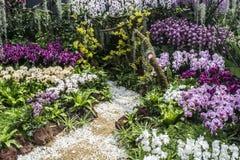Mostra da orquídea Fotografia de Stock Royalty Free