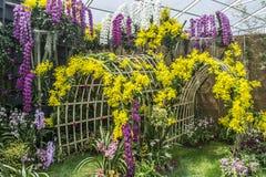 Mostra da orquídea Imagem de Stock Royalty Free