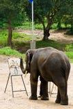 Mostra da pintura do elefante Imagens de Stock Royalty Free