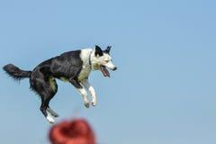 Mostra de cães Foto de Stock