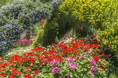 Mostra de flor Foto de Stock Royalty Free