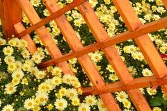 Mostra de flor Fotos de Stock