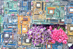 Mostra de flor Fotografia de Stock