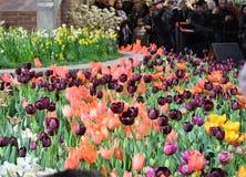 Mostra de flor 2017 de Philadelphfia Imagem de Stock