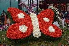 Mostra de flores imagem de stock royalty free