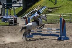 Mostra de salto do cavalo Fotografia de Stock Royalty Free