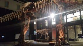Mostra dei dinosauri Fotografia Stock