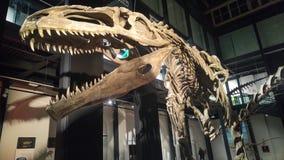 Mostra dei dinosauri Immagini Stock