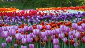 Mostra dei fiori immagini stock