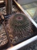 Mostra dei succulenti (cactus) in un giardino botanico Immagini Stock Libere da Diritti
