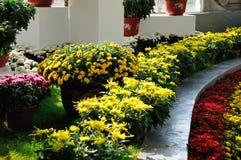 Mostra del crisantemo Immagine Stock Libera da Diritti