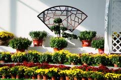 Mostra del crisantemo Fotografia Stock Libera da Diritti