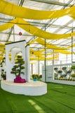 Mostra del crisantemo Fotografia Stock
