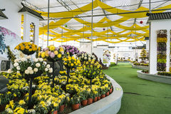 Mostra del crisantemo Immagini Stock