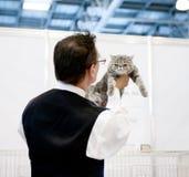 Mostra del gatto Immagine Stock