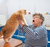 Mostra del gatto Fotografie Stock