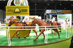 Mostra dell'equites e di Abu Dhabi International Hunting (ADIHEX) - Abu Dhabi Equestrian Club immagine stock