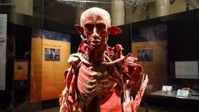 Mostra di anatomia del corpo umano VARSAVIA, POLONIA, il 15 febbraio 2018 archivi video