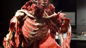 Mostra di anatomia del corpo umano VARSAVIA, POLONIA, il 15 febbraio 2018 stock footage