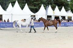 Mostra do adestramento do cavalo Fotografia de Stock Royalty Free