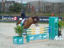 Mostra do cavalo de Normandy Imagem de Stock