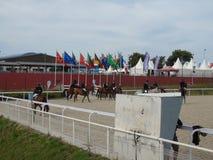 Mostra do cavalo de Normandy Fotografia de Stock