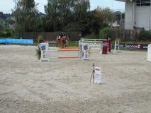 Mostra do cavalo de Normandy Fotos de Stock