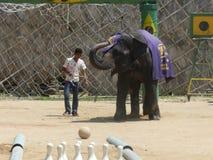 Mostra do elefante Fotos de Stock