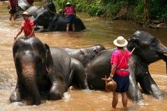 Mostra do elefante Foto de Stock