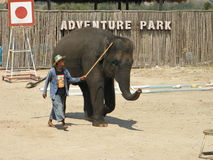 Mostra do elefante Imagem de Stock