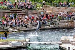 Mostra do golfinho imagens de stock