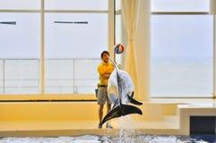 Mostra do golfinho no mundo Mito Japão do Aqua de Oarai Fotografia de Stock