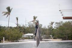 Mostra do golfinho no teatro do mar em Islamorada Fotos de Stock Royalty Free