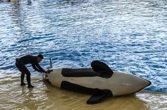 Mostra do oceano da orca no parque de Loro, Puerto de la Cruz, Tenerife, Cana fotografia de stock royalty free