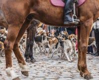 A mostra dos cães Imagem de Stock