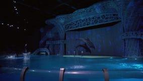 Mostra dos golfinhos no centro para vídeo conservado em estoque da metragem da oceanografia e da Marine Biology Moskvarium video estoque