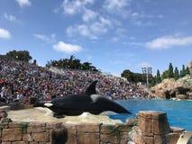 Mostra e multidão da orca do mundo do mar imagens de stock royalty free
