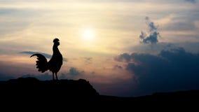 Mostra em silhueta corvos do galo na manhã Fotos de Stock Royalty Free