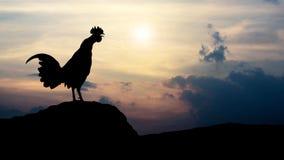 Mostra em silhueta corvos do galo na manhã Foto de Stock Royalty Free