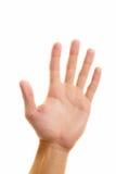Mostrar la palma Foto de archivo libre de regalías