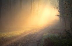 Mostras da névoa da manhã através dos eixos de luz Foto de Stock Royalty Free