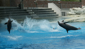 Mostre com golfinhos Imagem de Stock Royalty Free