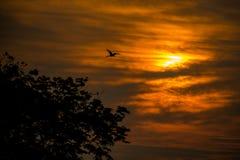 Mostre em silhueta a árvore e o pássaro de voo na manhã fotos de stock