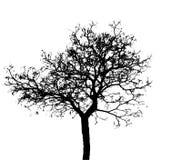 Mostre em silhueta a árvore inoperante isolada no fundo branco para assustador ou na morte com pancadinha do grampeamento fotografia de stock royalty free