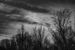 Mostre em silhueta a árvore inoperante no céu cinzento dramático escuro e nuble-se o fundo para assustador, a morte, e o conceito imagem de stock