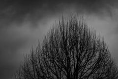 Mostre em silhueta a árvore inoperante no fundo dramático escuro do céu para assustador ou a morte Noite de Dia das Bruxas Concei imagens de stock
