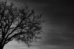 Mostre em silhueta a árvore inoperante no fundo dramático escuro do céu para assustador ou a morte Noite de Dia das Bruxas Concei foto de stock royalty free